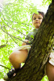 Courageous kid looking from above. Courageous kid climbed in a tree looking from above Stock Image