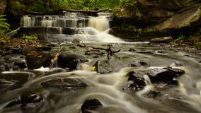 Courant avec des cascades fonctionnant par une forêt Photographie stock