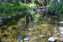 Courant clair comme de l'eau de roche dans la forêt d'été photos libres de droits