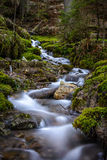 Courant d'eau sans à-coup débordant dans les bois Images libres de droits