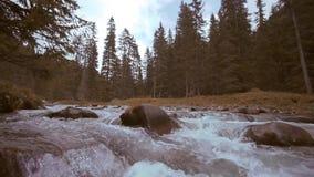 Courant d'un courant d'eau dans les écoulements de premier plan parmi les rochers dans la forêt des montagnes clips vidéos