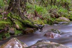 Courant d'un ravin et d'un arbre images stock