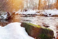 Courant dans la forêt d'hiver photographie stock libre de droits