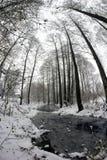 Courant dans la forêt parmi les arbres Photo libre de droits