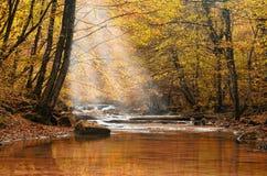 Courant dans le wood3 Images libres de droits