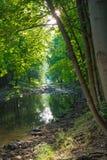 Courant dans une forêt IV image libre de droits