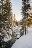 Courant dans une forêt neigeuse Photos libres de droits