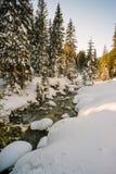 Courant dans une forêt neigeuse Photographie stock libre de droits