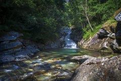 Courant de couleur claire avec un trou se baignant vert dans la forêt image stock