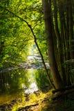 Courant de forêt au soleil images libres de droits