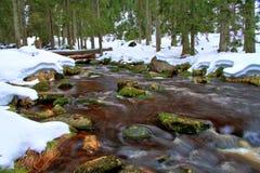 Courant de forêt avec la neige Image libre de droits