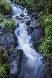 Courant de forêt de montagne Photo stock