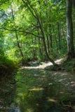 Courant de forêt en été photographie stock