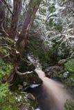 Courant de forêt le long de la promenade enchantée en montagne NP de berceau photos stock