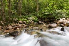 Courant de l'eau dans la forêt Images libres de droits