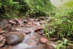 Courant de l'eau dans la forêt Images stock