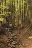 Courant de montagne avec les cascades et la rapide parmi les arbres dans le voyage alpin de forêt vers l'Europe, Suisse ext?rieur photos stock