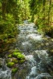 Courant de montagne d'été dans la forêt Photos stock