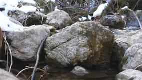 Courant de montagne dans la roche de forêt d'hiver au beau milieu de la rapide de rivière en premier ressort Beau fond de nature  clips vidéos
