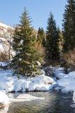 Courant de montagne en hiver les arbres photo stock
