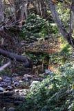 Courant de Napa Valley photo stock
