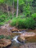 Courant de nature Photo libre de droits