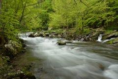 Courant de précipitation par la forêt Images stock