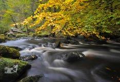 Courant de région boisée d'automne Images stock