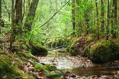 Courant de rivière dans les bois image stock