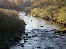 Courant de truite Photographie stock libre de droits