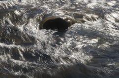Courant de truite Photo libre de droits