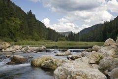 Courant de truite dans le Black Hills du Dakota du Sud Images libres de droits