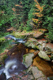 Courant en Autumn Mountain Forest Images stock