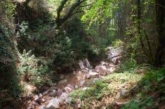 Courant en pierre dans la forêt dense, chemin couvert de pin sec Photos libres de droits