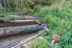 Courant et bois de flottage 2 images libres de droits