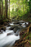 Courant et forêt Images stock