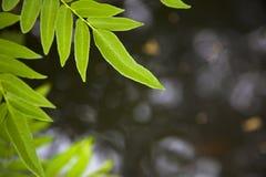 Courant ou rivière et feuilles Image libre de droits