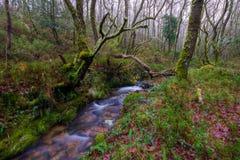 Courant par la forêt de chêne Images libres de droits