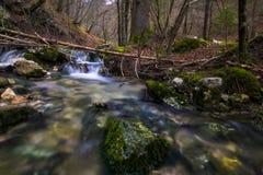 Courant par la forêt en parc national de Triglav photo stock