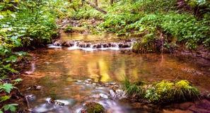 Courant par la forêt ensoleillée photos libres de droits