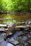 Courant profondément dans les bois photographie stock