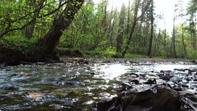 Courant rapide de forêt au coucher du soleil banque de vidéos