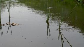 Courant rapide de for?t plantes vertes de mouvement de l'eau clips vidéos