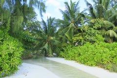 Courant sur la plage dans Praslin Photo libre de droits