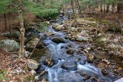 Courant traversant les bois en premier ressort Photo stock