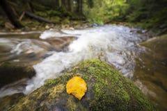 Courant vert sauvage traversant fluide de rivi?re de for?t de montagne avec l'eau clair comme de l'eau de roche et la feuille jau image stock