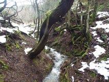 Courants dans la campagne avec la rivière Photo stock