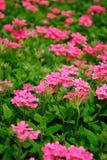 Courbe sexy des fleurs d'été photos libres de droits
