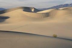Courbes sinueuses sur des dunes de sable Photo libre de droits