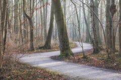 Courbure de S dans la forêt Photographie stock libre de droits